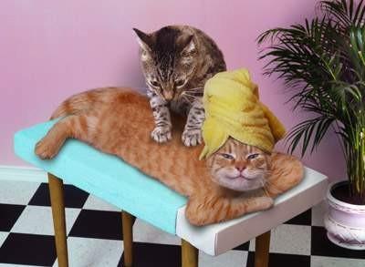 Die Tieroase und Pflegestellen