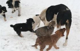 03.2020  Kastrationsaktion Straßentiere