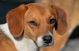 07.2020 Bijou…eine Hundesuche… Drama in X Akten